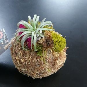 Rainey's WhimZ's Accents - Moss bowl with Air Plant